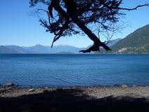 Manhã na costa do lago com silhueta de uma árvore Imagens de Stock Royalty Free