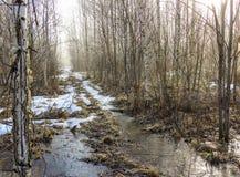 Manhã na estrada de floresta Fotografia de Stock Royalty Free
