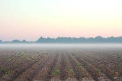 Manhã na exploração agrícola Imagens de Stock