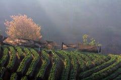Manhã na exploração agrícola Fotografia de Stock Royalty Free