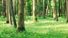 Manhã na floresta filme