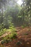 Manhã na floresta fotos de stock royalty free