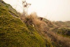 Manhã na floresta Fotos de Stock