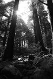 Manhã na floresta Foto de Stock