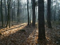 Manhã na floresta do outono imagens de stock