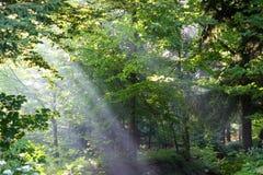 Manhã na madeira Imagens de Stock Royalty Free