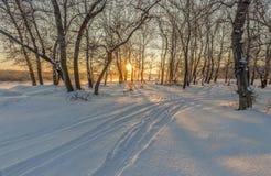 Manhã na madeira do inverno Foto de Stock Royalty Free