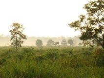 Manhã na selva Imagens de Stock