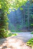 Manhã nas madeiras Fotografia de Stock Royalty Free