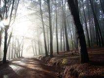 Manhã nas madeiras Foto de Stock