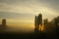 Manhã nevoenta Imagem de Stock
