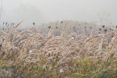 Manhã nevoenta Foto de Stock Royalty Free