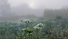 Manhã nevoenta Através das nuvens o sol olha o out_ fotografia de stock