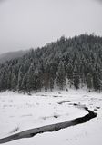 Manhã nevoenta do inverno Imagens de Stock