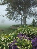 Manhã nevoenta do inverno Foto de Stock