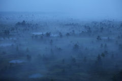Manhã nevoenta do pântano Fotos de Stock Royalty Free