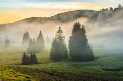 Manhã nevoenta em florestas das coníferas no por do sol Imagens de Stock Royalty Free