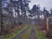 Manhã nevoenta na floresta Foto de Stock