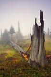 Manhã nevoenta na floresta inoperante Fotos de Stock
