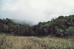 Manhã nevoenta na montanha, Doi Inthanon o mais northernmost de Sião, Chiang Mai, Tailândia fotografia de stock