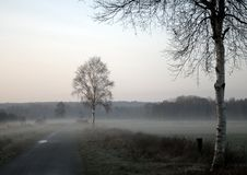 Manhã nevoenta na reserva natural Teufelsmoor Fotos de Stock