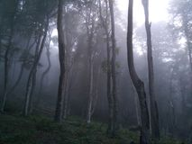Manhã nevoenta nas madeiras imagem de stock royalty free