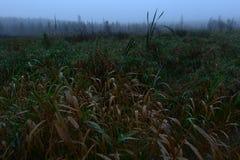 Manhã nevoenta no outono do amanhecer do pântano Foto de Stock Royalty Free