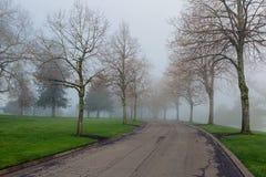 Manhã nevoenta no parque foto de stock