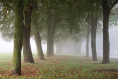 Manhã nevoenta no parque da cidade Foto de Stock Royalty Free