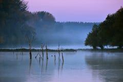 Manhã nevoenta no rio Imagens de Stock