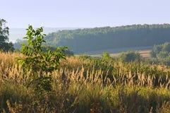 Manhã no campo, pastagem, horizontalmente Imagens de Stock Royalty Free