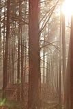 Manhã no outono Fotografia de Stock Royalty Free