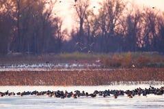 Manhã no pântano foto de stock royalty free