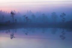 Manhã no pântano estônio Imagens de Stock