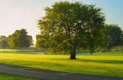 Manhã no parque Fotografia de Stock