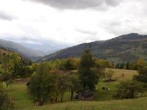 Manhã nos Carpathians ucranianos Névoa nos montes Imagens de Stock