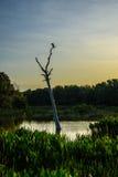 Manhã nos pantanais para um Anhinga imagem de stock royalty free