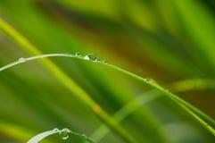 A manhã orvalha na grama verde Fotos de Stock Royalty Free