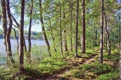 Manhã pelo lago Imagens de Stock Royalty Free