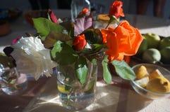 Manhã roses2 Imagens de Stock Royalty Free