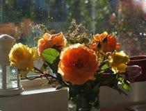 Manhã roses2 Imagens de Stock
