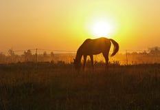 Manhã sobre ao prado Foto de Stock Royalty Free