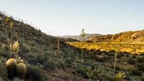 Manhã Sun no deserto de Anza Borrego Foto de Stock