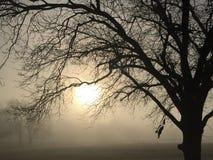 Manhã tranquilo Foto de Stock