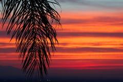 Manhã tropical Fotografia de Stock