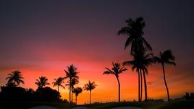 Manhã tropical Fotos de Stock
