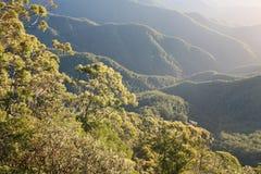 Manhã da floresta húmida Imagens de Stock