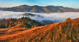 Manh? do outono Nascer do sol nevoento nas montanhas Carpathian foto de stock royalty free