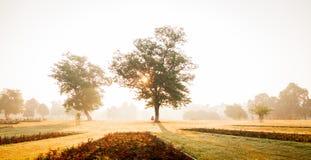 Manhã enevoada Imagem de Stock Royalty Free