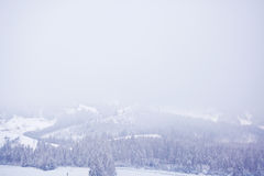Manhã nevoenta coberto de neve do inverno das montanhas Carpathian ucrânia Foto de Stock
